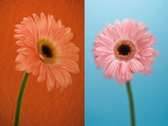 34 Photoshop effects every photographer must try