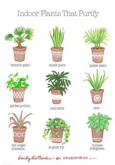 ohdeardrea: indoor plants that purify guidew