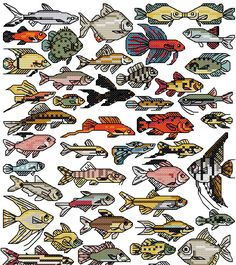 tropical fish  To get the chart, click on the first line under the photo