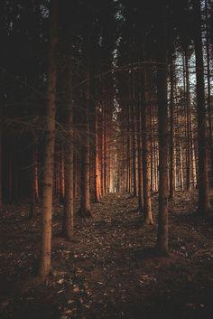 Walking through the woods.