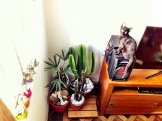 Cactus and cats
