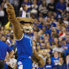 Cats to the finals!! :)