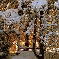 Snowy Forest Sunrise, Quebec, Canada