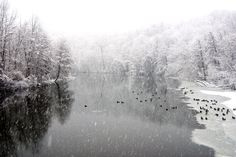 Winter wonderland. Huron River, Ann Arbor, Michigan. Gorgeous photograph.