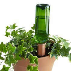 This watering stake self-waters your plants even when you're away from home. Now your plants won't go thirsty again.