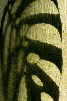 Tropical Leaf Shadow