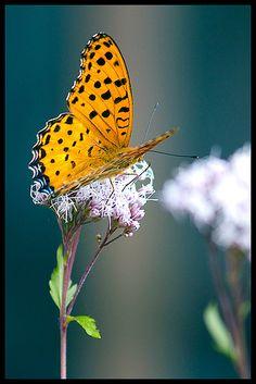 Bright orange butterfly