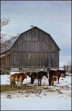Love old barns!  :) #provestra
