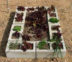 raised beds made from cinder blocks ... easy!