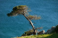 Landscape image of a lone tree, Clifden, County Galway, Ireland