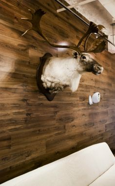 Installing laminate flooring on the wall - love the look....minus the caribou head :(