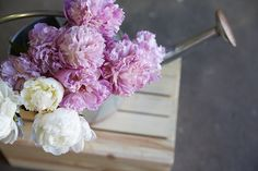 Gorgeous Peonies...
