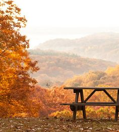 Beautiful Autumn Scene counti state, autumn scenes, state parks, color, fall, peaceful places, brown counti, cup of coffee, picnic