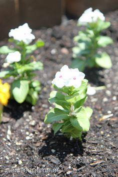 Planting flowers #lowescreator