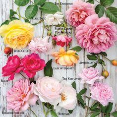 Summer Roses