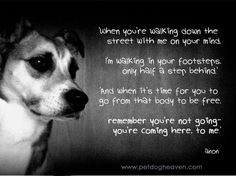 A Dog's Prayer for grieving humans   Happiness awaits - I Believe In Dog Heaven : I Believe In Dog Heaven