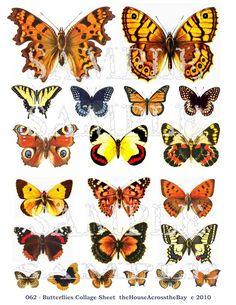 Butterflies - digital sheet