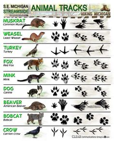 2 FREE Animal Tracking Posters