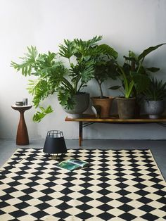 Black and white rug | Tropical plants
