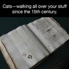 =^..^=  proof of cats