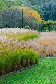 Beds of grasses