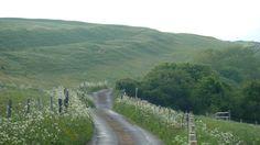 near Eggardon Hill