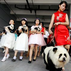Dogs dyed as pandas in China