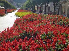 Braga Public garden