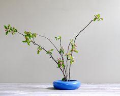 flower pots, low flower, pot planter