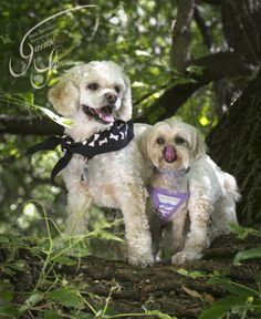 Gainsboro Studio believes our pets should have a place in our most precious memories... Don't forget to capture them, Call Gainsboro Studio today!  403 866-7427 http://www.gainsboro.ca