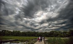Walk the boardwalk at Maplewood Nature Center -- and look for bats!