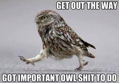 HAHA bird, anim, laugh, stuff, funni, humor, owl shit, owls, thing