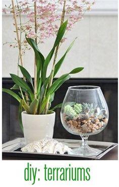 terrariums: best plants + tips