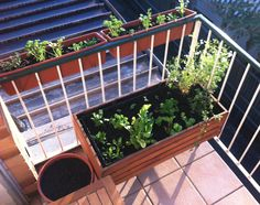 7 Edible Plants You Can Grow In Pots To Support Your Immune System