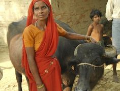 help a community dairy end extreme poverty
