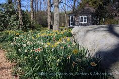 hous view, gardenshous exterior, cottag gardenshous, summer houses