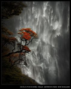punch bowls, waterfalls, tree, newzealand, devil punchbowl, natur, beauti, place, new zealand