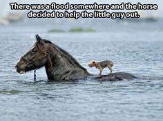 Beautiful act of animal kindness…