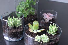 Uma boa idéia: pequenas plantas em copos.