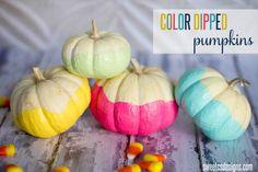 color dipped pumpkins-cute
