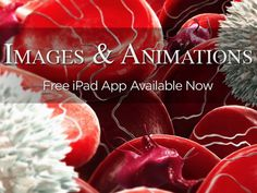 3D4Medical Images & Animations app now available on iPad - http://ow.ly/o9MZr