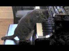 CATcerto. ENTIRE PERFORMANCE. Mindaugas Piecaitis, Nora The Piano Cat - YouTube