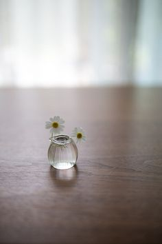small white flowers in small pitcher