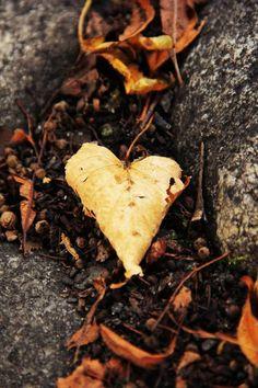 heart http://pinterest.com/misoxo/love-in-the-world/