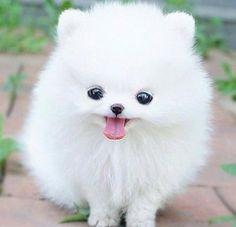 It's a pillow dog.
