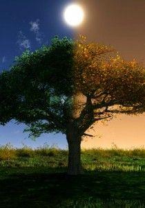 Autumn Equinox recipes, remedies and rituals