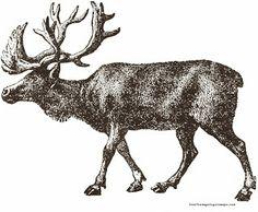 Reindeer printable...**FREE ViNTaGE DiGiTaL STaMPS**