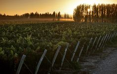 A beautiful sunset at foothills of the Andes in La Colonia Estate, Mendoza, Argentina
