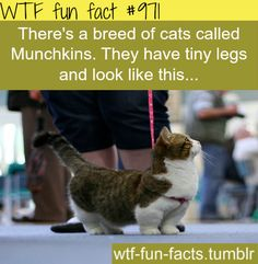 GIVE ME THIS CAAAAAAT! If you bred this cat with grump cat it would equal best cat on the planet!