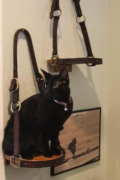 Shelf made from leather halters. Great way to display halters hors, cat shelves, tack rooms, candles, tack room ideas, leather halter, hous, equestrian barns stables, christma